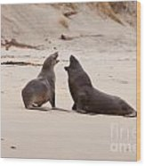 Rough Courtship Of Male And Female Hookers Sealions Wood Print