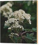 Rowan Flowers Wood Print