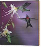 Ruby-throated Hummingbirds (archilochus Wood Print
