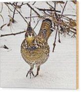 Ruffed Grouse Walking On Snow - Horizontal Wood Print