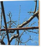 Sagamihara Asamizo Park 17c Wood Print