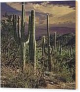 Saguaro Cactuses In Saguaro National Park Wood Print
