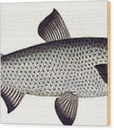 Salmon Wood Print