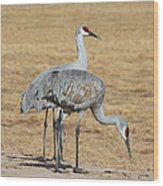 Sand Hill Cranes Eating Wood Print