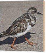Ruddy Turnstone On The Beach Wood Print