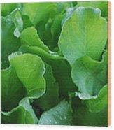 Santoro Lettuce 2 Wood Print