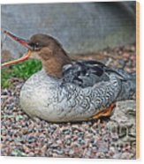 Scaly-sided Merganser Hen Wood Print