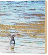 Sea Bird Wood Print