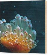 Sea Life Wood Print