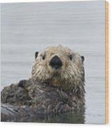 Sea Otter Alaska Wood Print