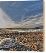 Sea Shell Sea Shell By The Sea Shore At Presque Isle State Park Series Wood Print