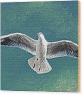 10427 Seagull In Flight Wood Print