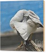 Seagull On A Rock Wood Print