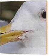 Seagull Portrait Wood Print