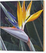 Seaport Bird Of Paradise Wood Print