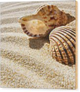 Seashell And Conch Wood Print by Carlos Caetano
