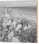Seaside Grass Wood Print