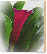 Seeing Red Wood Print