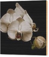 Sepia Orchids Wood Print