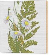 Set Of Chamomile Daisy Bouquets White Wood Print