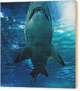 Shark Silhouette Underwater Wood Print