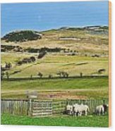 Sheep In Meadow Wood Print