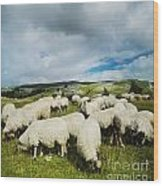 Sheep In The Field Wood Print