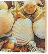 Shells Wood Print by Denise Darby