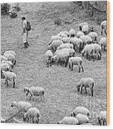 Shepherd With Sheep  Wood Print