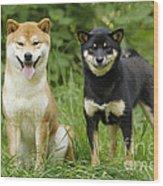 Shiba Inu Dogs Wood Print
