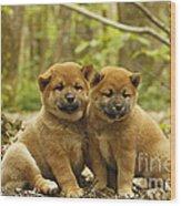 Shiba Inu Puppies Wood Print