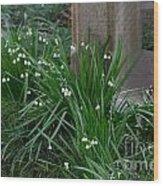 Signs Of Spring Wood Print
