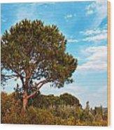 Single Pine Tree Against Blue Autumn Sky Wood Print