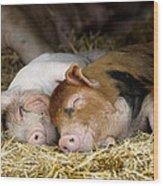 Sleeping Hogs  Wood Print