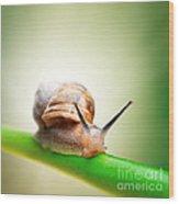 Snail On Green Stem Wood Print by Johan Swanepoel