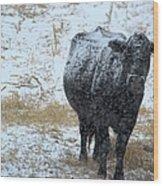 Snow Angus Wood Print