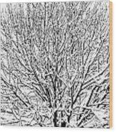 Snow Cover Wood Print