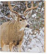 Snowstorm Deer Wood Print