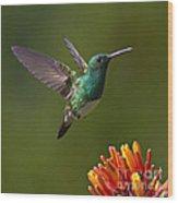 Snowy-bellied Hummingbird Wood Print by Heiko Koehrer-Wagner