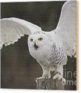 Snowy Owl Wood Print
