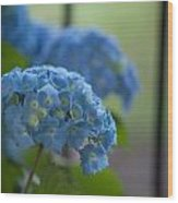 Soft Blue Hydrangea Wood Print