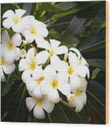 Soft Plumeria Wood Print