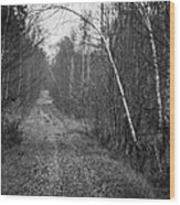Solitude Forest Wood Print