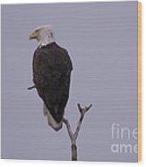 Solo  Bald Eagle Wood Print