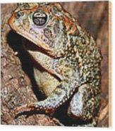 Southern Toad Bufo Terrestris Wood Print