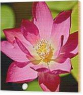 Sparks Lotus Wood Print