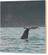 Sperm Whale Diving  Wood Print