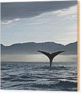 Sperm Whale Physeter Macrocephalus Wood Print