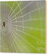 Spider Web With Dew Drops With Spider On Web Wood Print