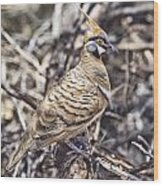 Spinifex Pigeon Wood Print